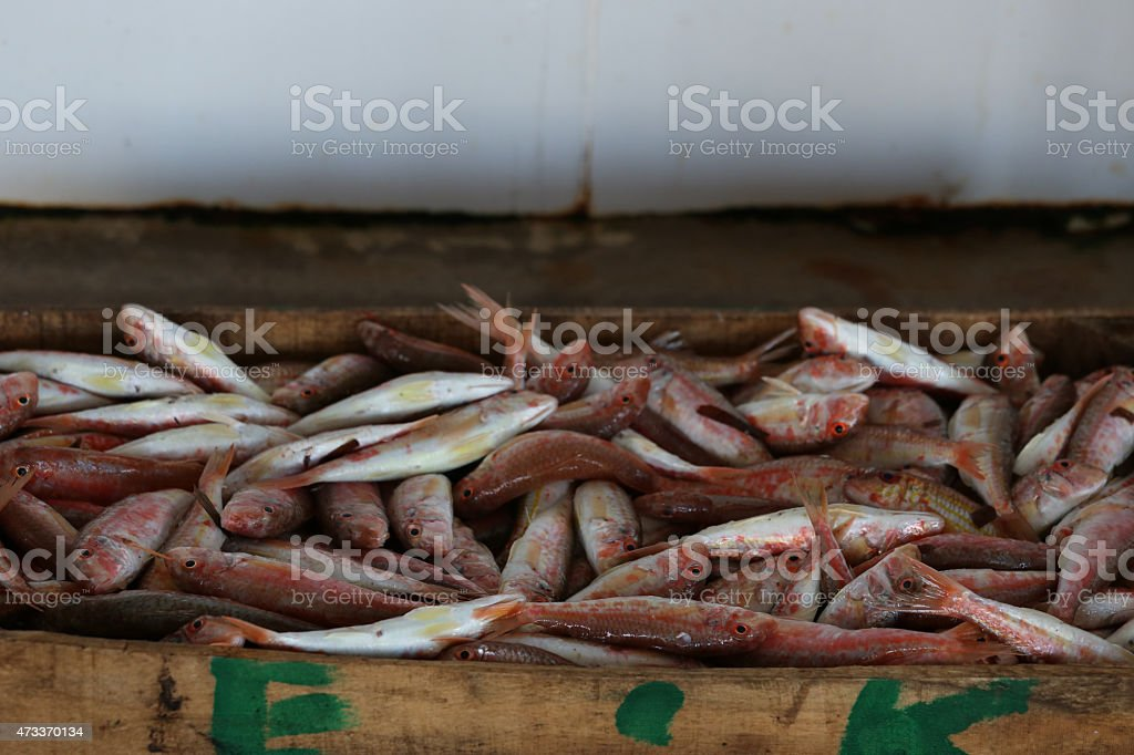 Fresh Raw Mediterranean Red Mullets at Market stock photo