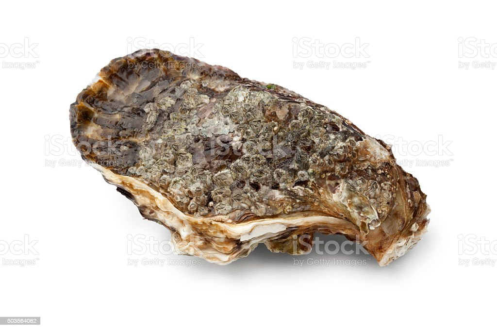 Fresh raw pacific oyster stock photo