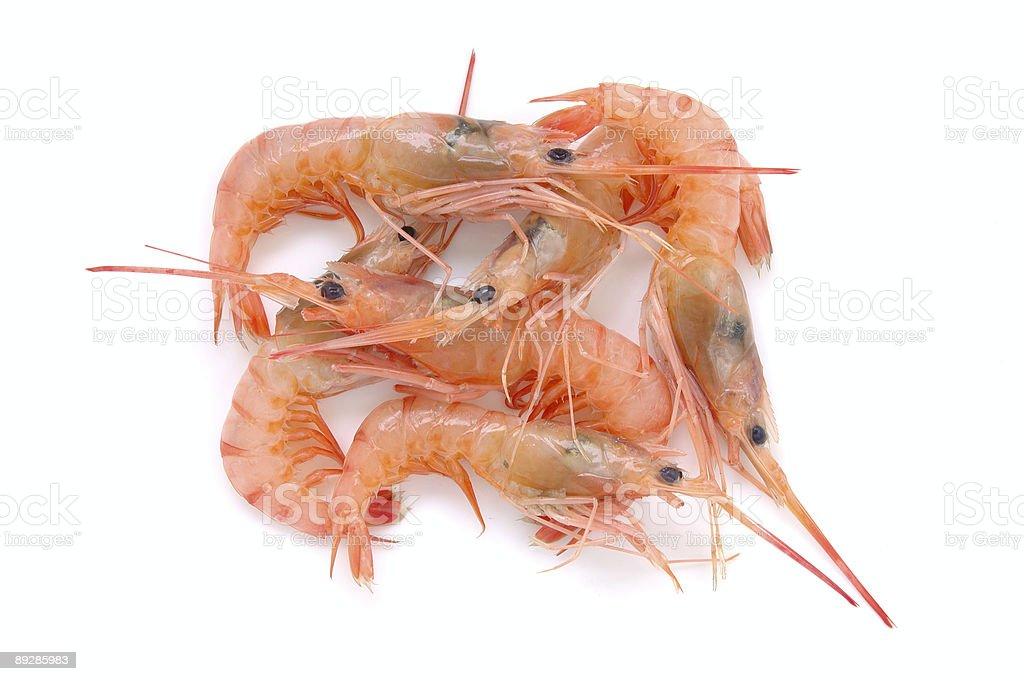 Fresh raw prawns royalty-free stock photo