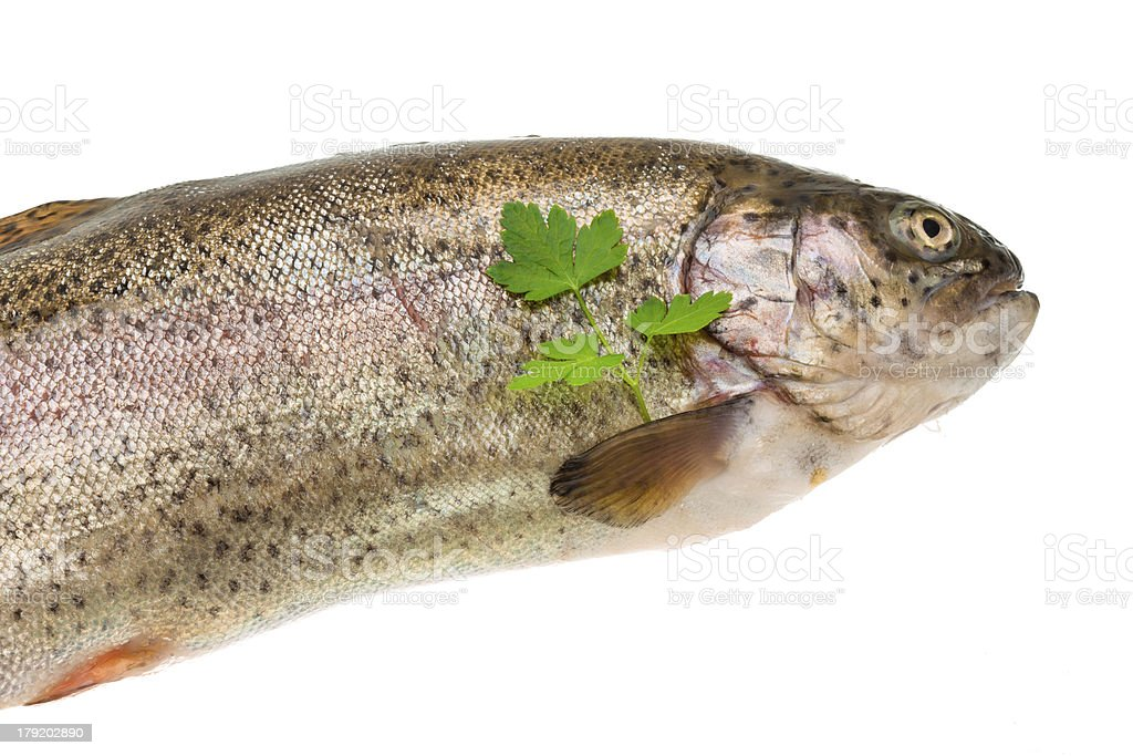 Fresh raw rainbow trout royalty-free stock photo