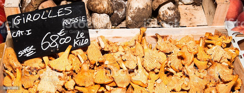 Fresh raw Russian Golden Chanterelle mushrooms stock photo