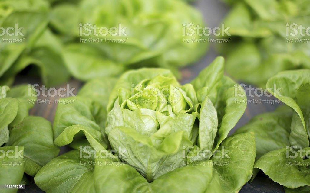 fresh raw salad in Chiangmail Thailand. stock photo