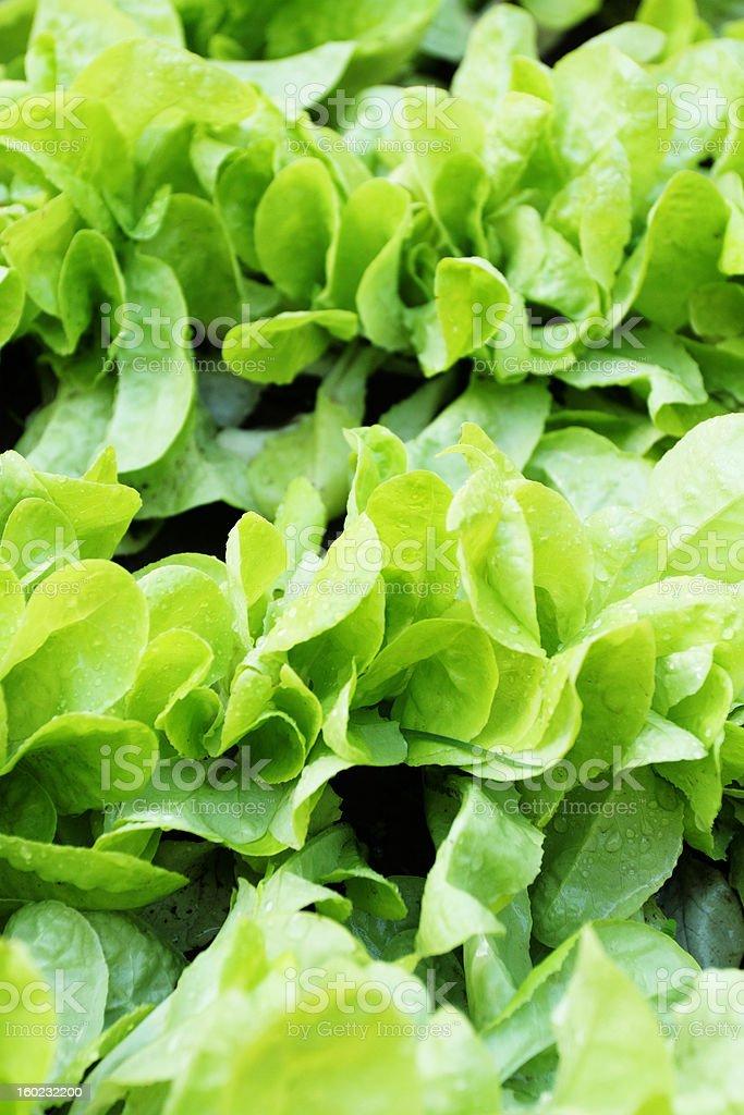 fresh raw salad stock photo