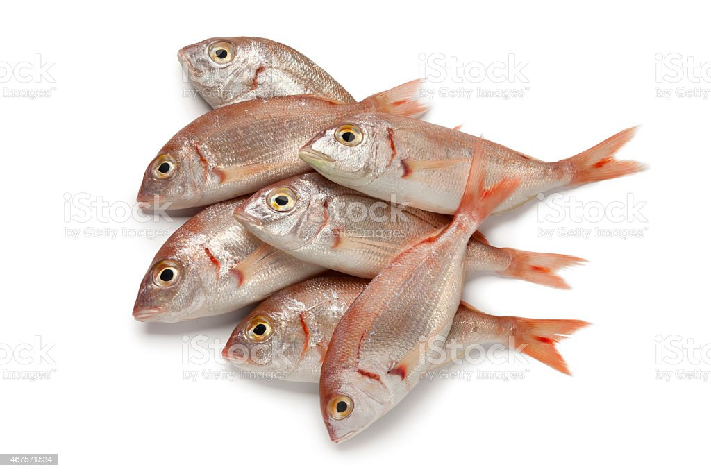 Fresh raw small red snappers stock photo