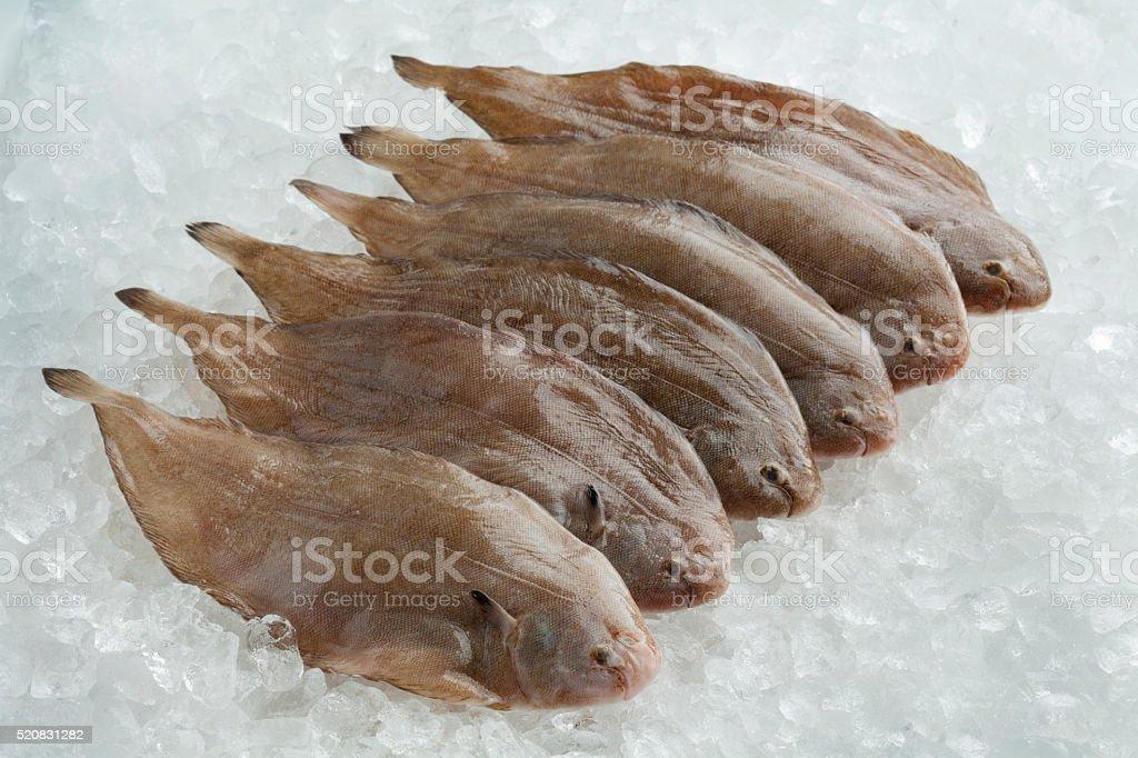 Fresh rawcommon sole fishes stock photo