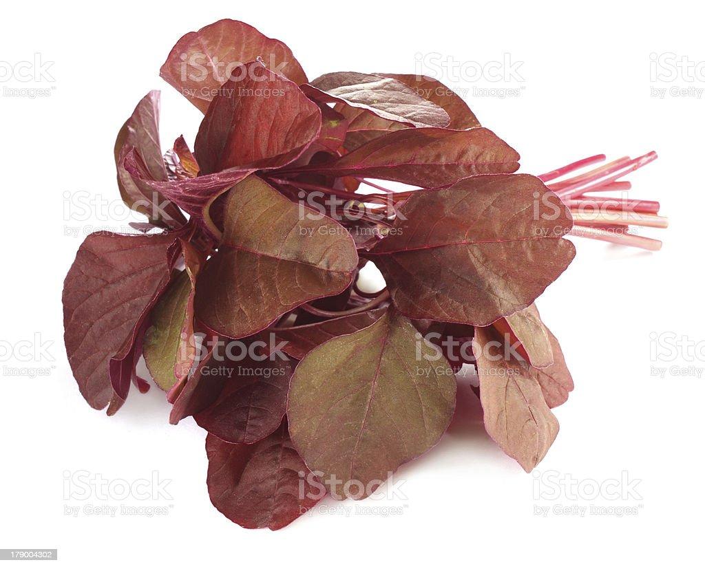 Fresh red amaranth stock photo
