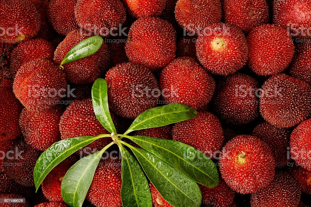 Fresh red arbutus fruits stock photo