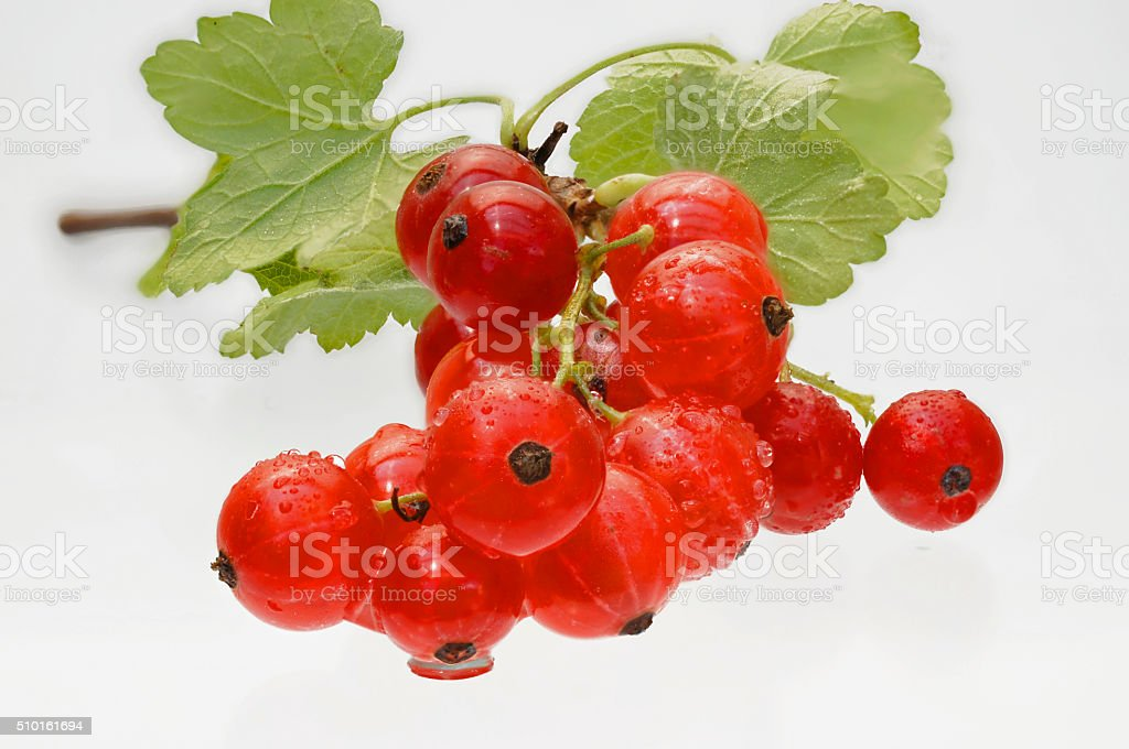 fresh red currants on white stock photo