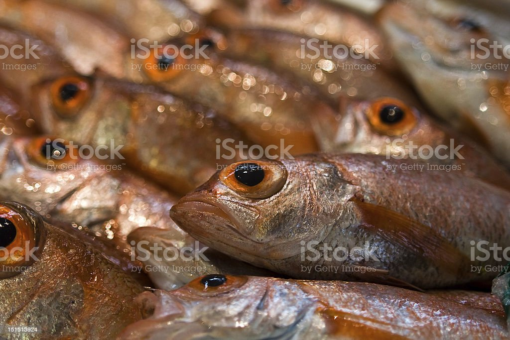 Fresh Red Fish royalty-free stock photo