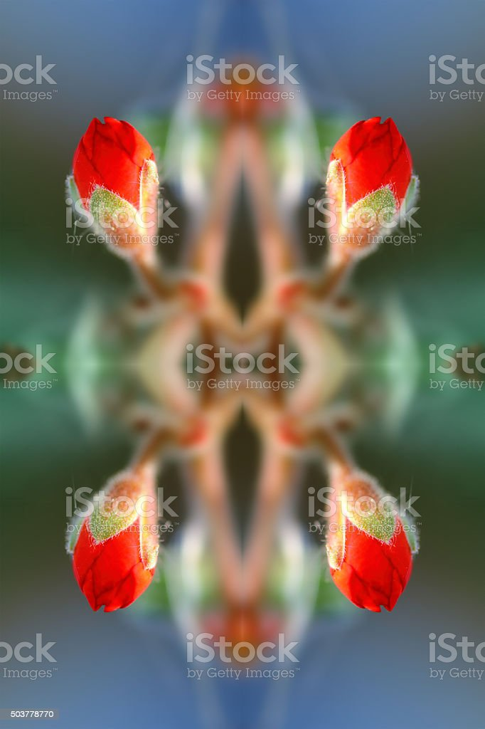 Fresh red flower bud surreal shaped symmetrical kaleidoscope stock photo