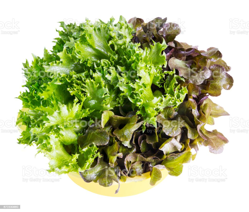 Fresh red oak and frillice Iceberg leaf lettuce on white background stock photo