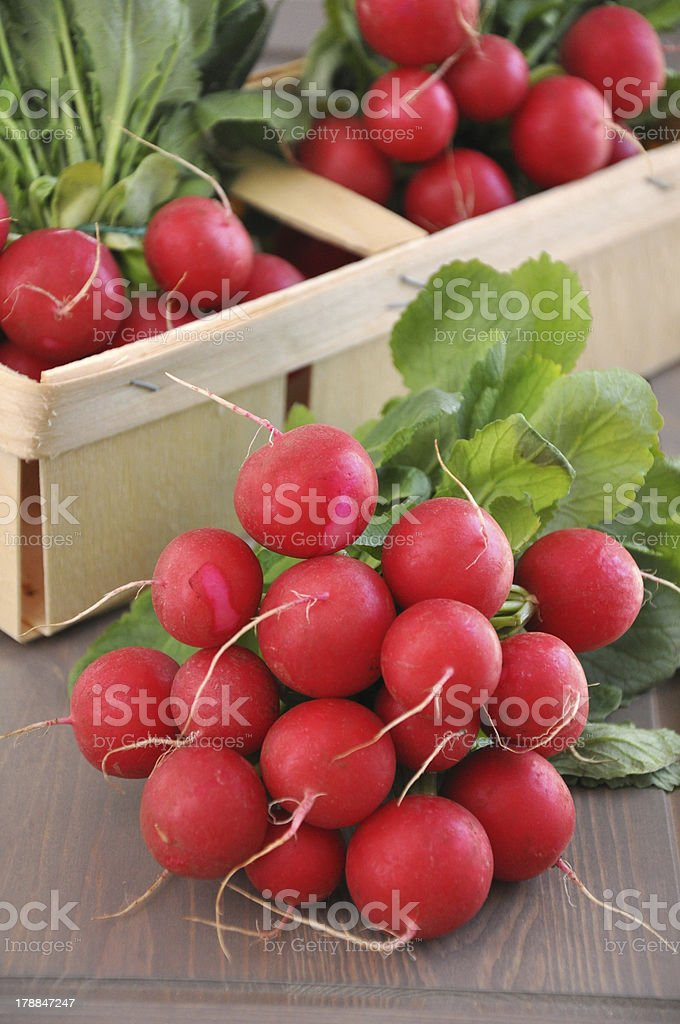 Fresh red radish royalty-free stock photo