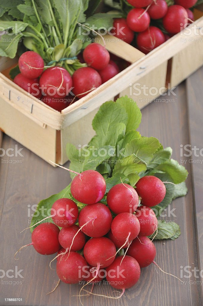 Fresh red radish royalty-free stock photo