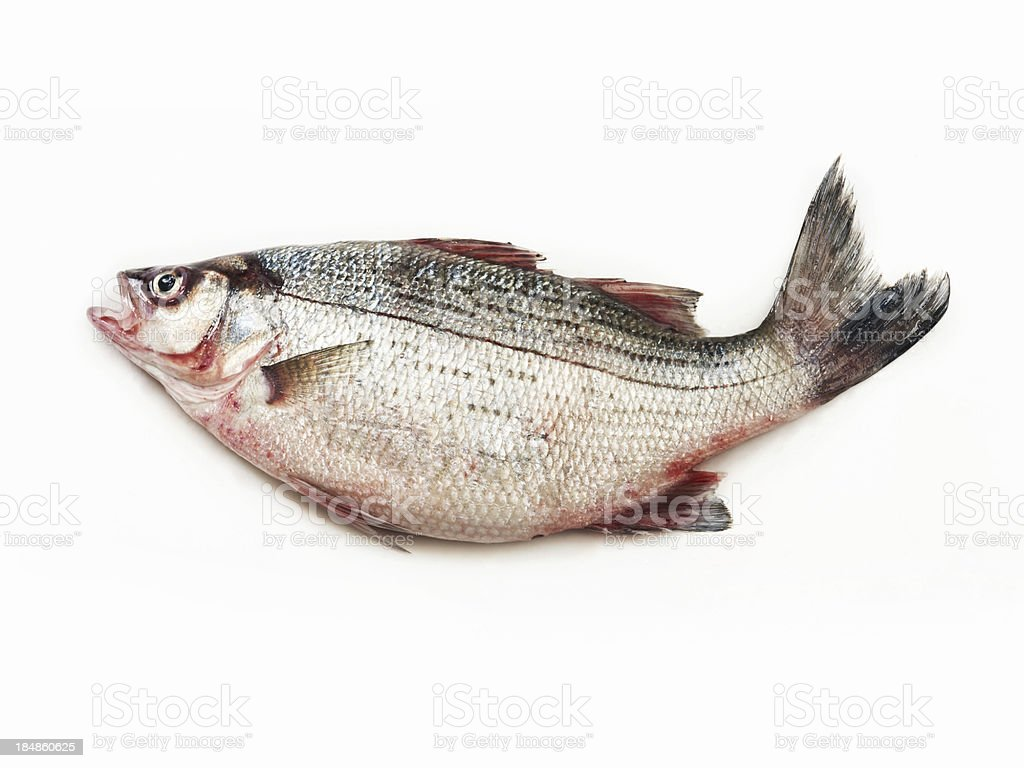 Fresh Red Snapper stock photo