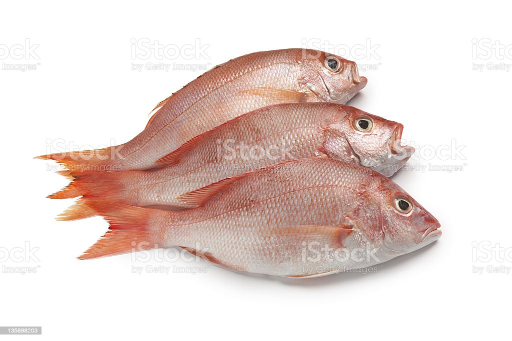 Fresh red snappers royalty-free stock photo