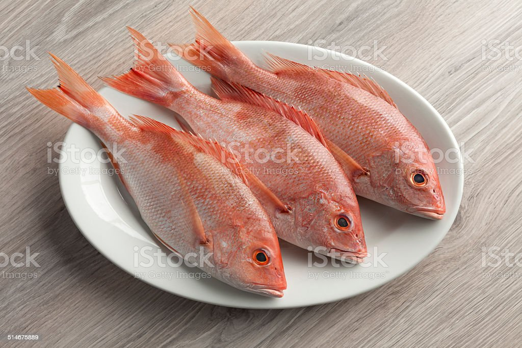 Fresh red snappers stock photo