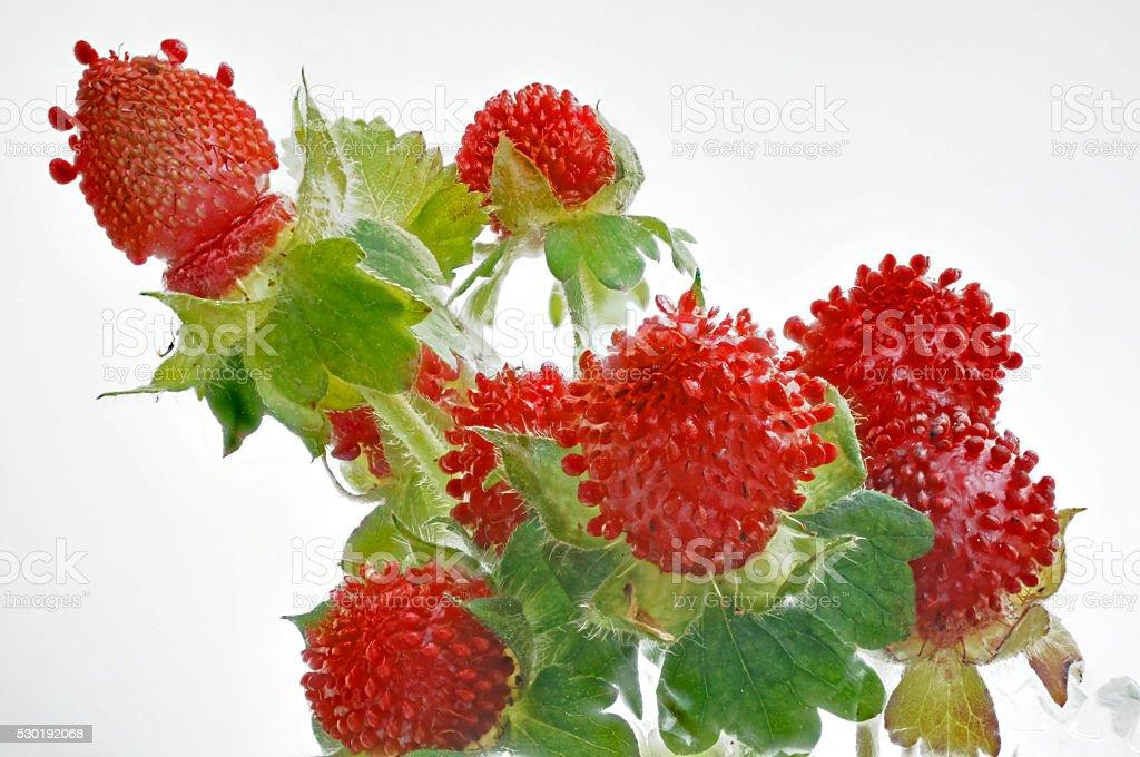 fresh red wild strawberries on white stock photo