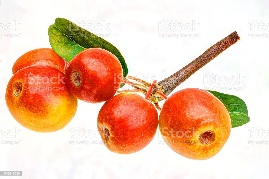 fresh red-yellow apples on a white background stock photo