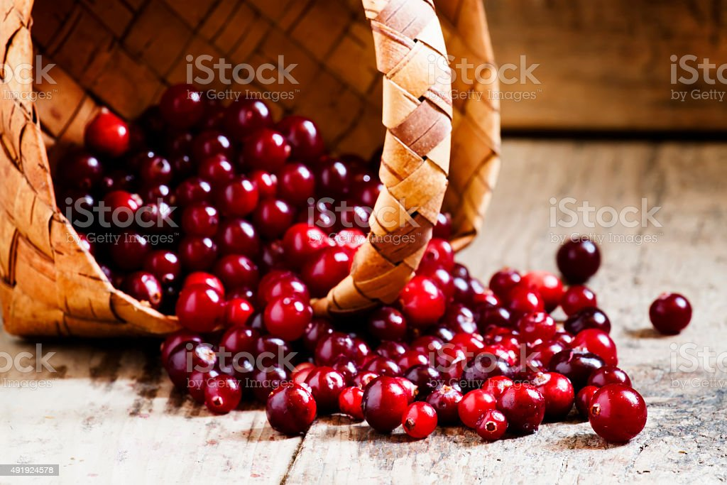Fresh ripe cranberries poured out of a wicker basket stock photo