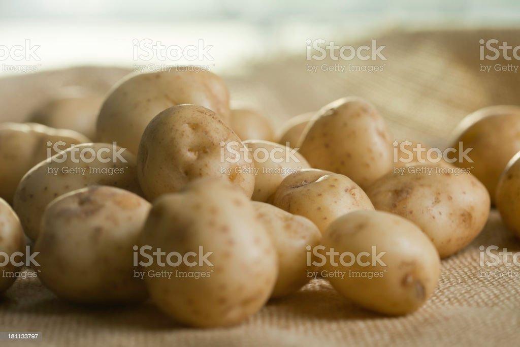 Fresh Ripe White Potatoes stock photo