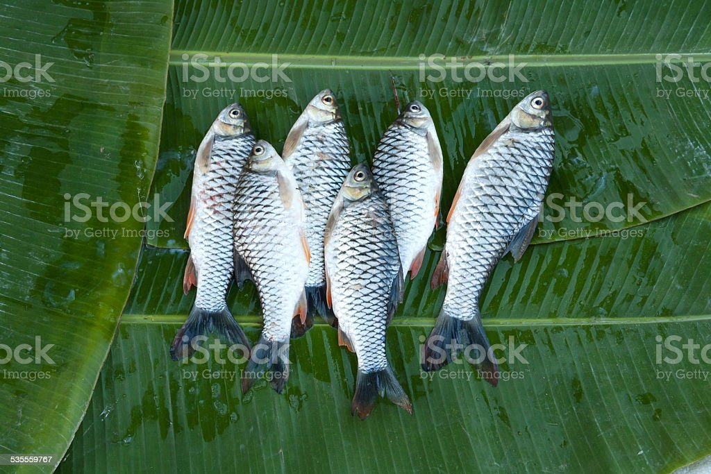 Fresh river fish at the market in Thailand royalty-free stock photo