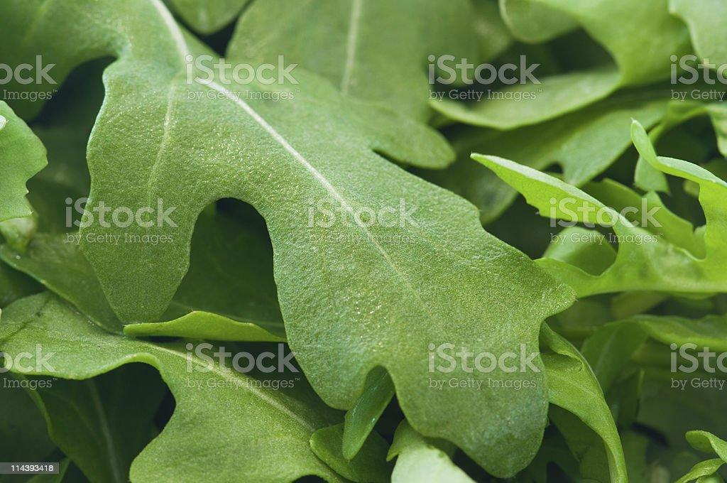 Fresh rocket salad leaves royalty-free stock photo