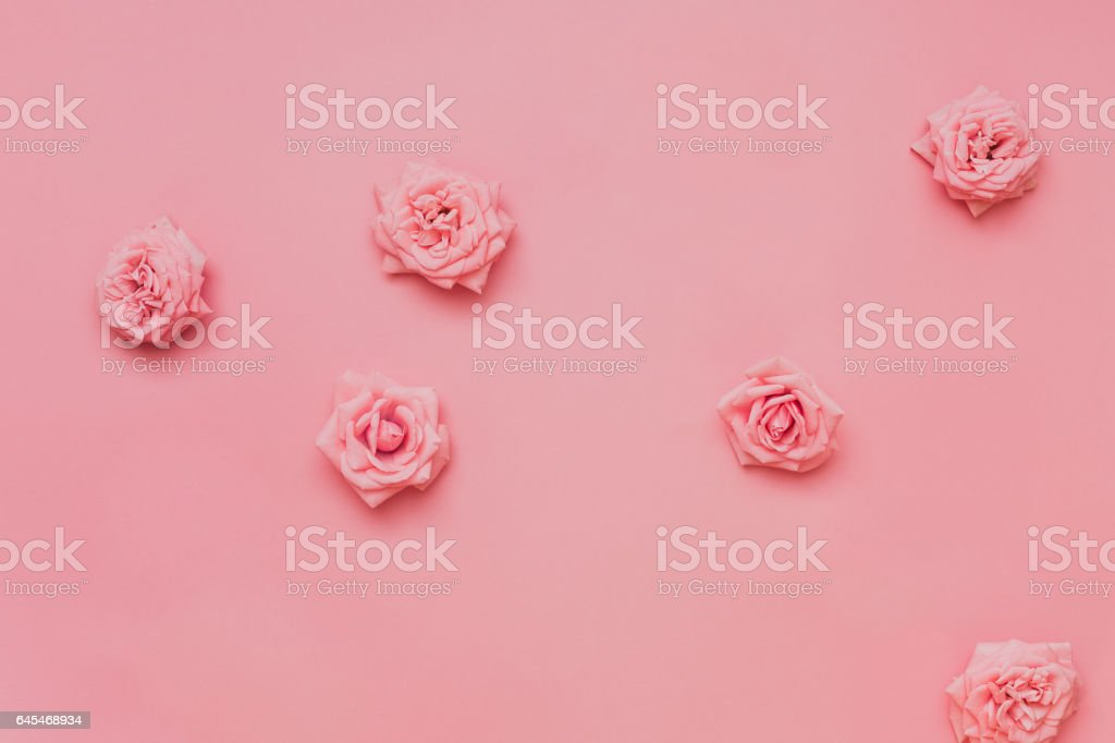 Fresh rose floral background stock photo