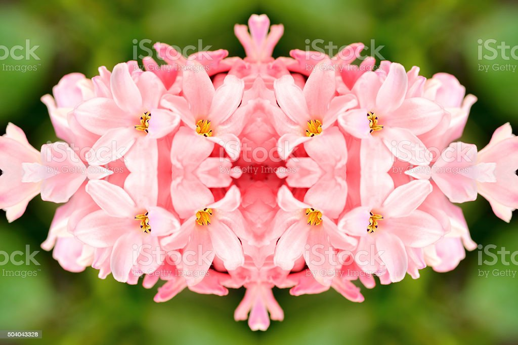 Fresh Rose Quartz pink Hyacinth flowers surreal shaped symmetrical kaleidoscope stock photo