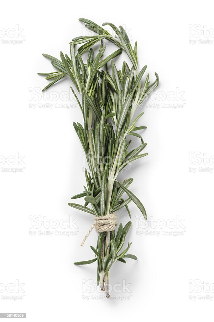 fresh rosemary bunch stock photo