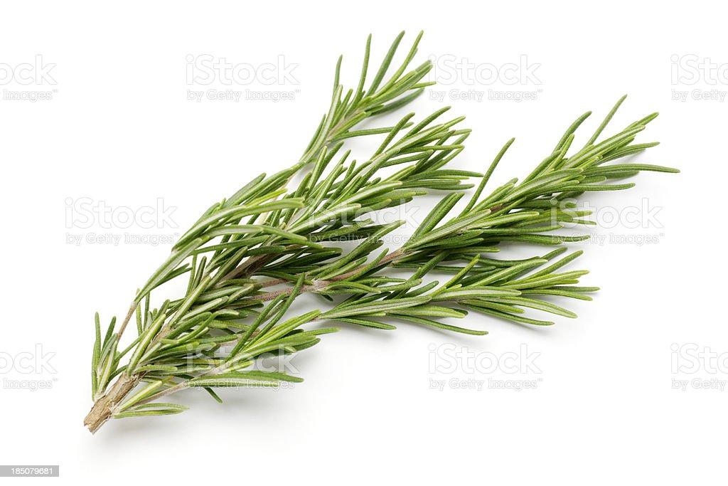 Fresh Rosemary Isolated on White royalty-free stock photo