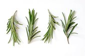 Fresh Rosemary (Rosmarinus officinalis) on White