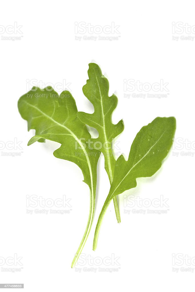 fresh rucola leaves stock photo