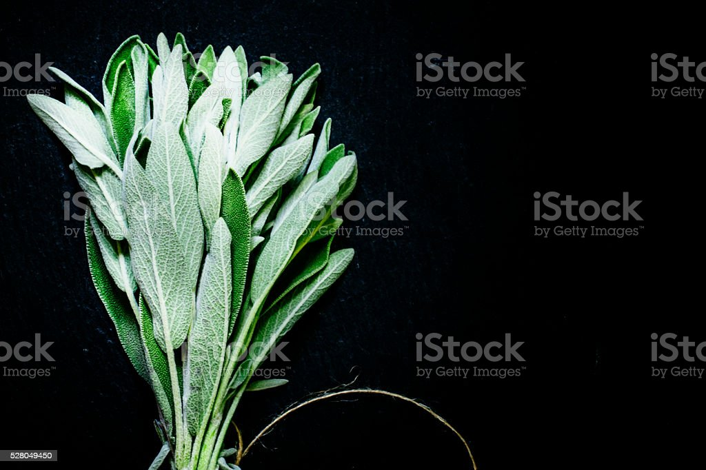 Fresh sage in the beam, black background stock photo