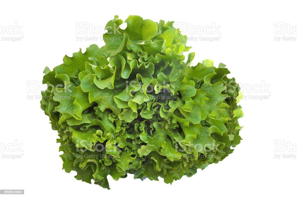 Fresh salad lettuce stock photo
