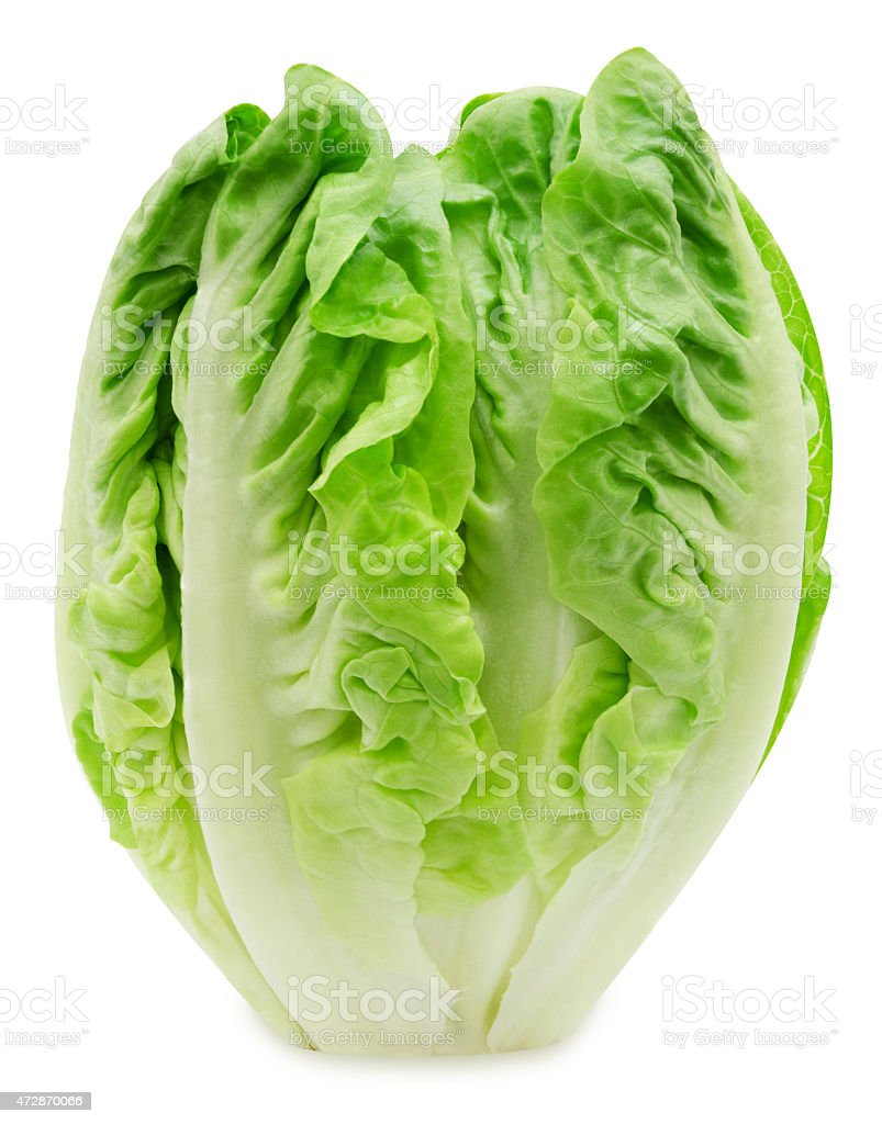 Fresh salad romaine lettuce stock photo