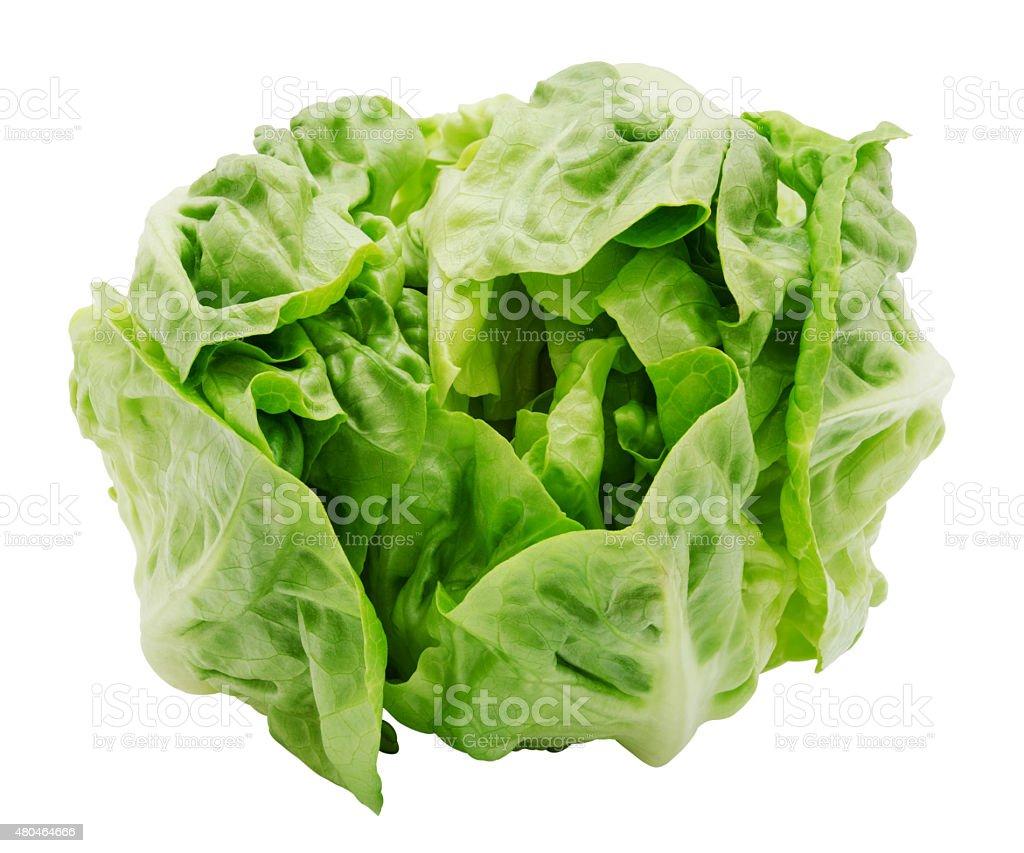 Fresh salad romaine lettuce stock photo