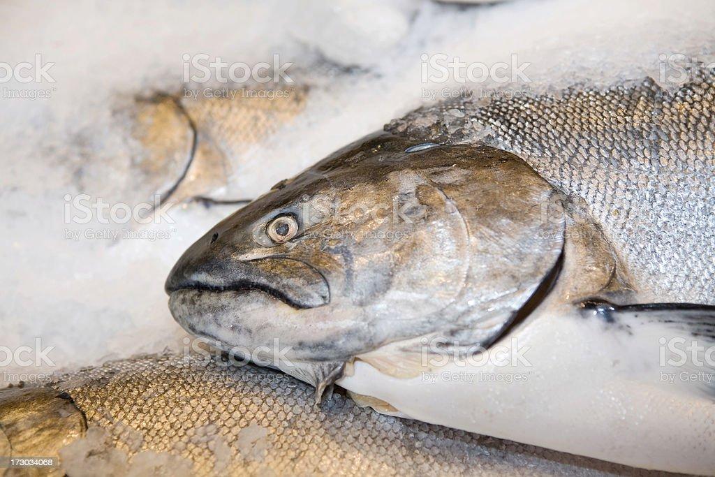 Fresh Salmon at Market stock photo