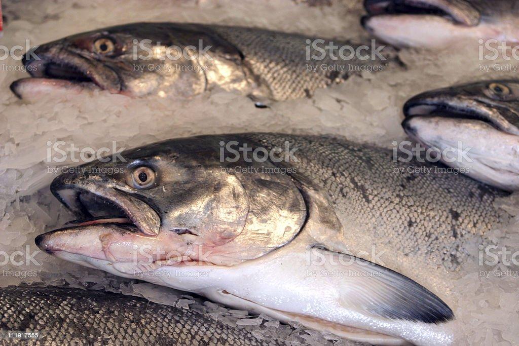 Fresh Salmon on Ice stock photo