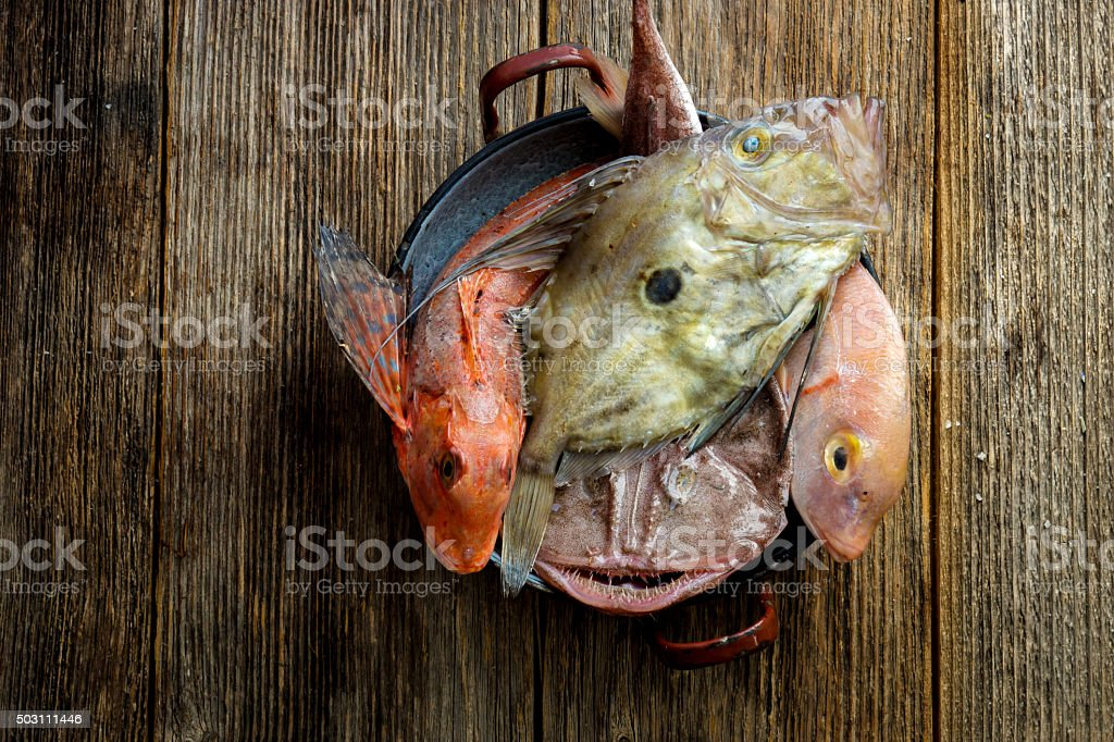 Fresh saltwater fish stock photo