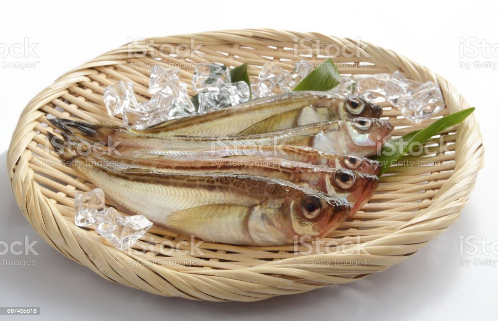 Fresh Sandfish with Ice Cube on Colander stock photo