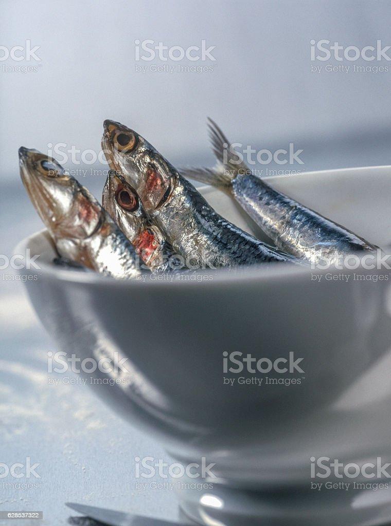 fresh sardines in bowl stock photo