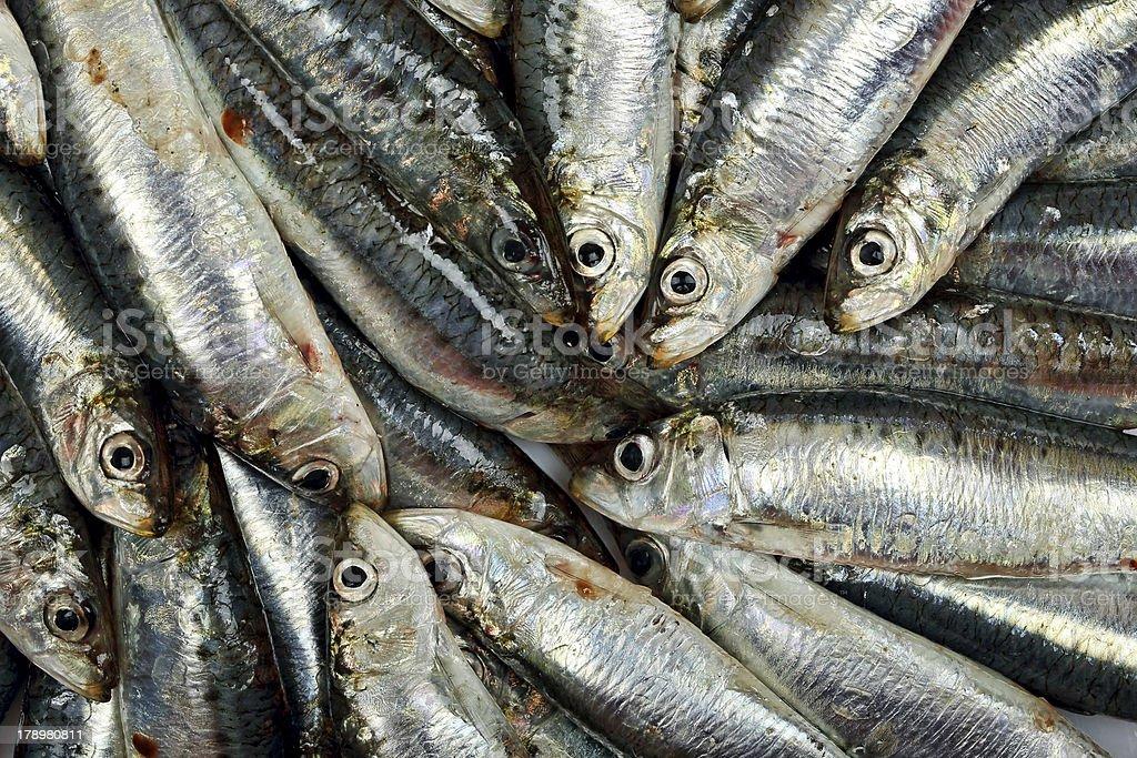 fresh sardines royalty-free stock photo