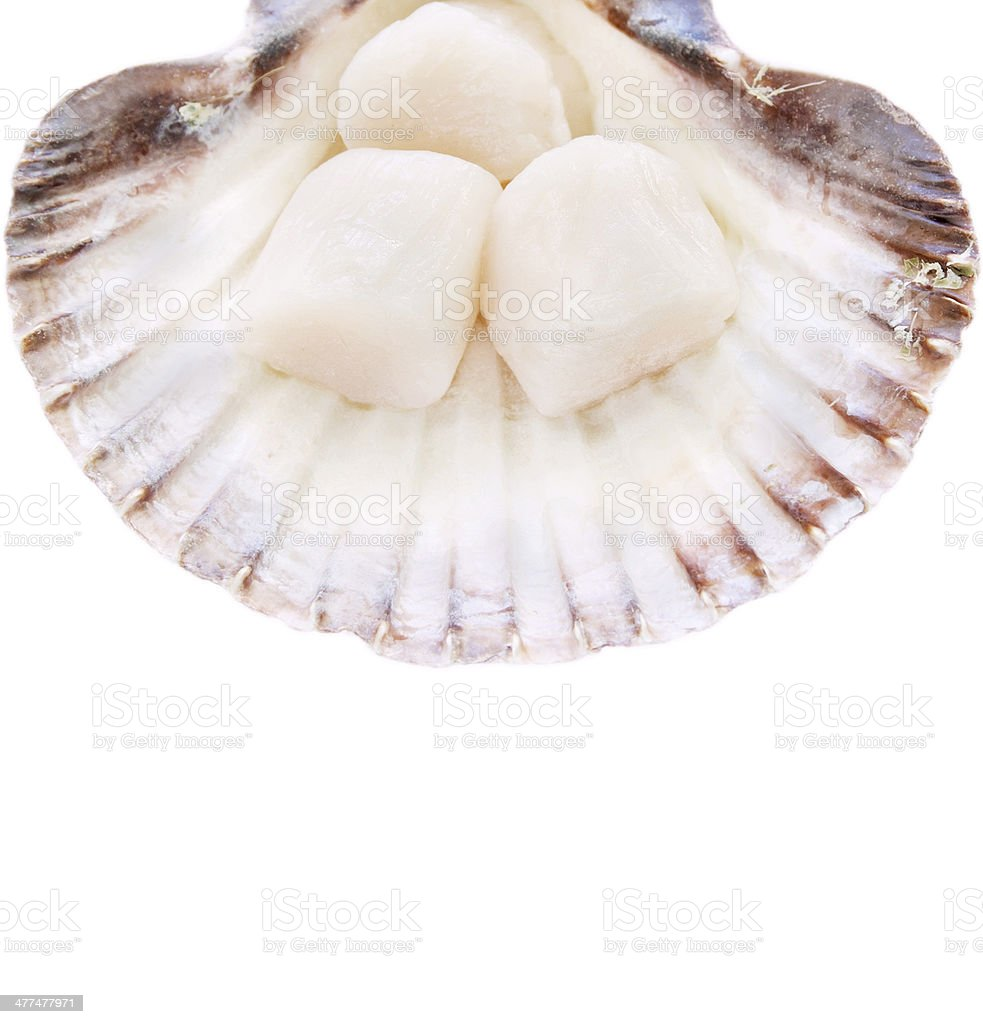 Fresh Scallops  in shell ,isolated royalty-free stock photo