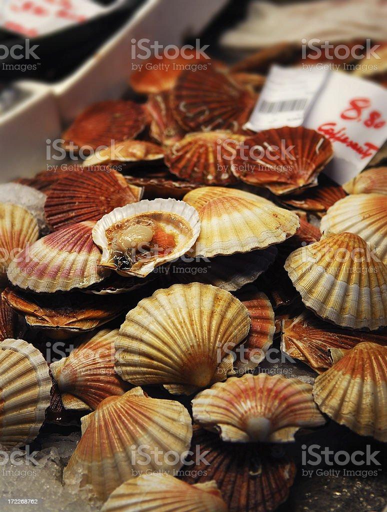 fresh scallops royalty-free stock photo