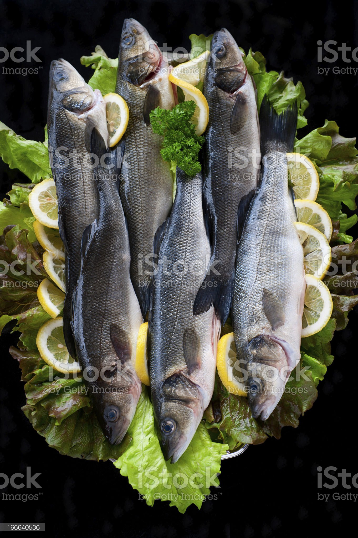 Fresh Sea bass ready to cook royalty-free stock photo