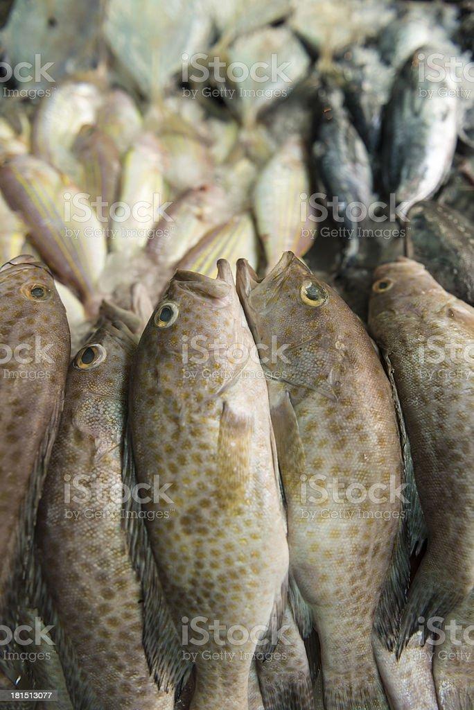 Fresh sea fish in Bangkok market royalty-free stock photo