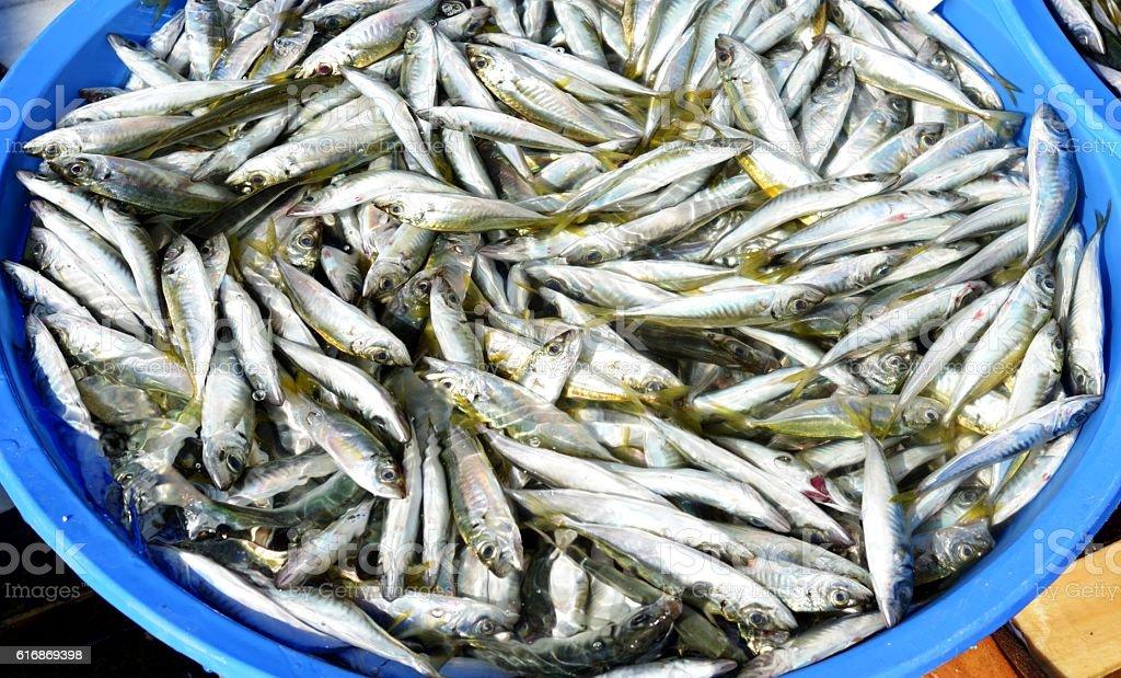 Fresh sea fish stock photo