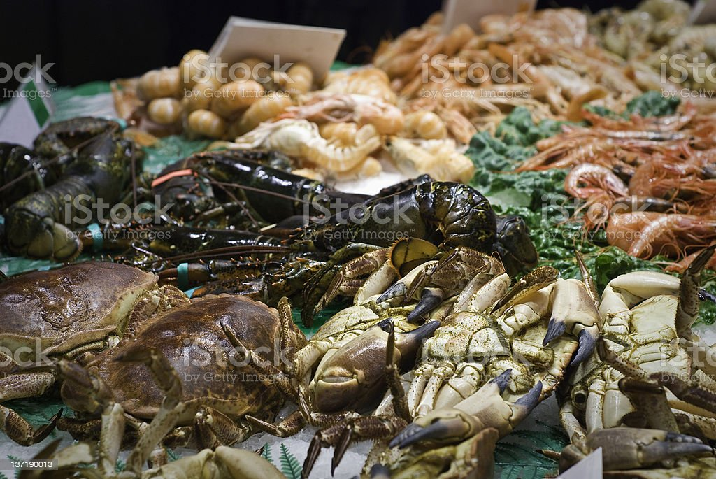 Fresh sea food display with green garnishment  stock photo