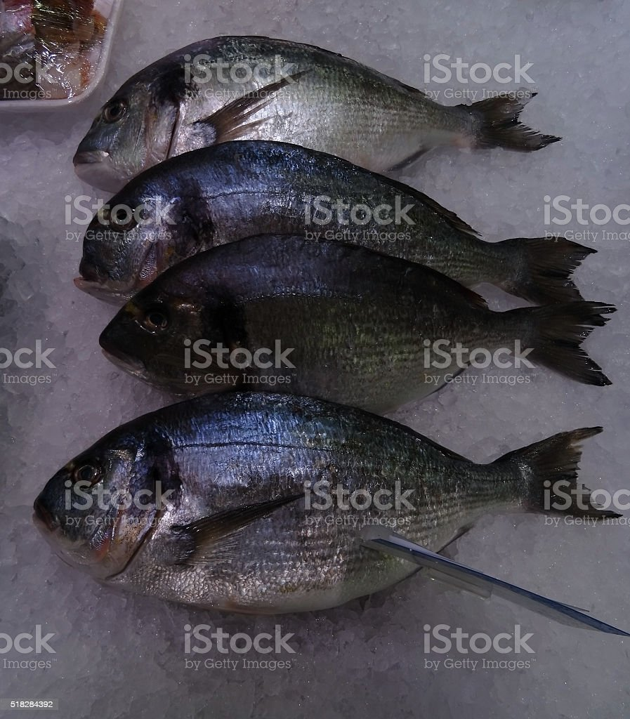 Fresh seabass fish on ice in seafood store stock photo