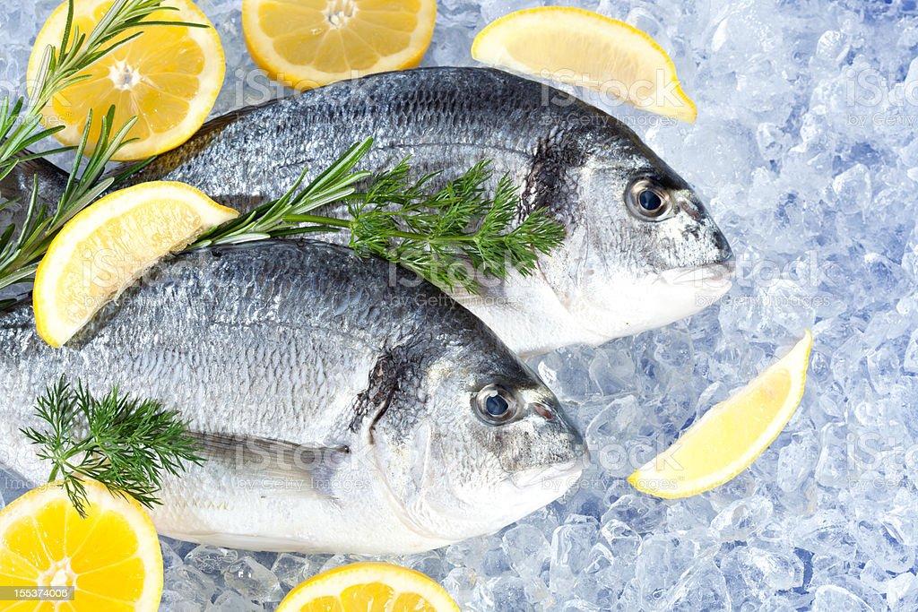 fresh seafish stock photo
